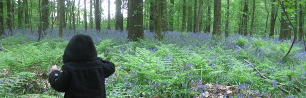 Sininen metsä lumoaa belgialaiset keväisin